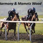 Blue Harmony&Mametz Wood (10)