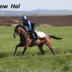 Shallow Hal (3)
