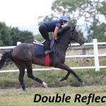 Double Reflection (5)