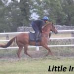 Little India (3)