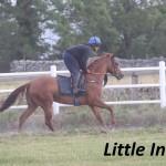 Little India (4)