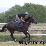 Majestic Appeal (1)