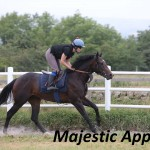 Majestic Appeal (2)