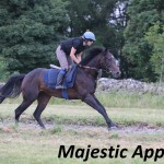 Majestic Appeal (8)